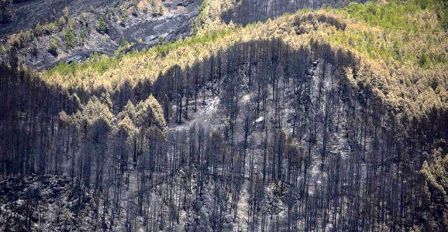 Ein abgebranntes Waldstück. Viele der verkohlten Bäume werden sich mit der Zeit wieder erholen. Foto: EFE