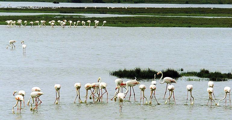 Der Nationalpark Doñana ist das größte Feuchtgebiet Spaniens. Foto: EFE