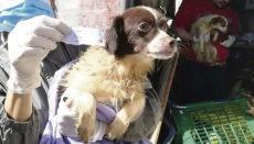 Adepac gerettete Hunde