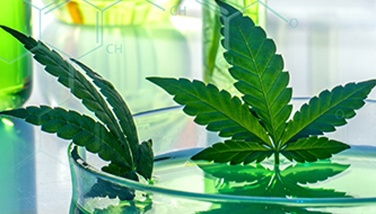 Cannabis foto Pixabay