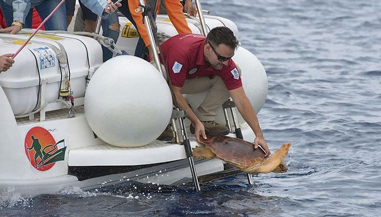 Relativ häufig werden an der Küste der Inseln Meeresschildkröten mit Verletzungen gefunden. Erfreulicherweise werden viele von ihnen im Wildtier-Pflegezentrum des Cabildos geheilt und wieder aufgepäppelt, damit sie anschließend ihr Leben in Freiheit fortsetzen können. Das Bild zeigt die Freilassung einer Meeresschildkröte an der Küste von Teneriffa. Foto: Cabildo de Tenerife