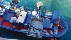 Der Fang aus der illegal ausgebrachten Reuse wird entladen. Foto: Gobierno de Canarias