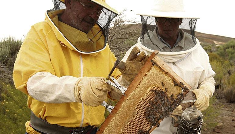 Der geringe Niederschlag macht den Bienenzüchtern das Leben schwer. Foto: efe