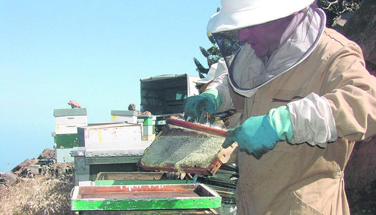 Das ROCA-Team der Guardia Civil mit einigen der sichergestellten Bienenstöcke Foto: GUARDIA CIVIL