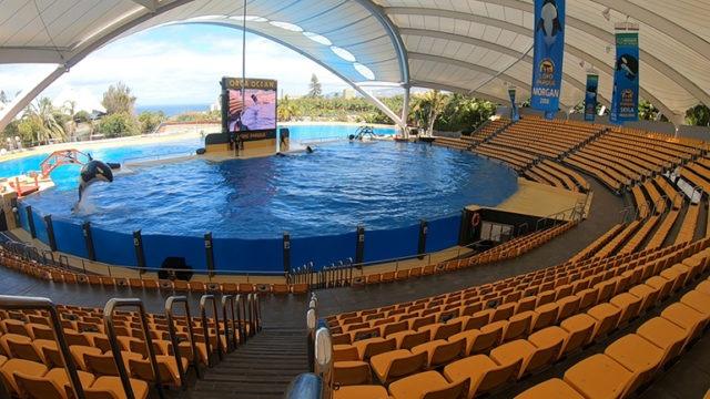 BU: Auch ohne Zuschauer führen Orcas, Delfine, Seelöwen und Papageien täglich mehrmals ihre Übungen durch. Das hält die Tiere geistig und körperlich fit. Foto: Loro Parque