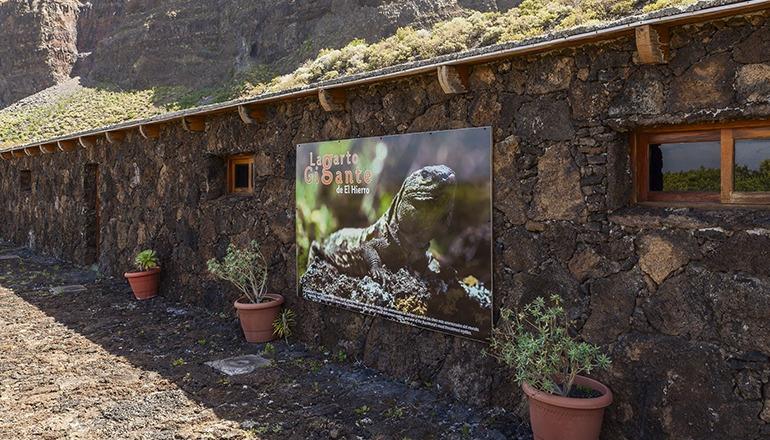 Die Zuchtanlage für Rieseneidechsen der endemischen Art (Gallotia simonyi) ist eines der Kulturzentren, die Teil des Programms sind. Foto: Cabildo de El Hierro