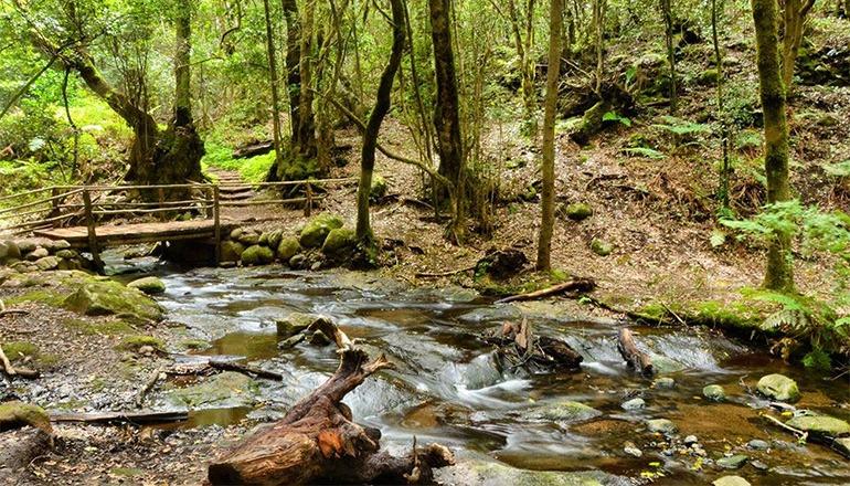 Parque Nacional de Garajonay CABGOM