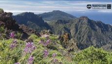 Der Ultramarathon führt entlang des Bergrückens quer über die Insel, und die Läufer durchqueren dabei ganz unterschiedliche Klimazonen. Foto: Transvulcania