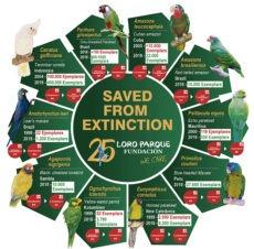 Schon zehn Papageienarten konnten dank der Loro Parque Fundación vor dem unmittelbar bevorstehenden Aussterben gerettet werden.