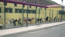 """Im Tierheim """"Valle Colino"""" in La Laguna (www.alberguevallecolino.org) warten noch viele Hunde und Katzen darauf, eine neue Familie zu finden. Foto: Ayuntamiento La Laguna"""