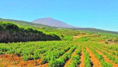 In vielen Teilen der Insel Teneriffa sind die Bauern mit ihrer Arbeit auf eine funktionierende Bewässerung angewiesen. Foto: Cabildo de Tenerife