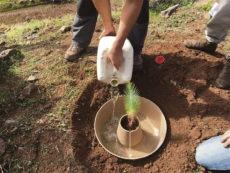 Der Cocoon erhöht die Überlebenschance frisch gepflanzter Setzlinge um ein Vielfaches.