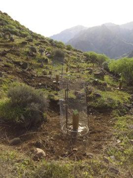 Nur mit Aufforstung kann der Wüstenbildung und Bodenerosion entgegengewirkt werden. Foto: Cabildo de Gran Canaria