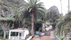 Foto: Cabildo de Tenerife