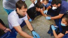 An Stränden von Teneriffa und Gran Canaria nahmen die Wissenschaftler die Markierung der Tiere vor. Sie versprechen sich davon neue Informationen über das Verhalten und die Bedrohung dieser Art. Fotos: LP