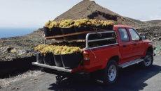 Die Weinlese 2020 geht als die kürzeste seit Beginn der Aufzeichnungen in die Geschichte ein. Foto: vinoslapalma.com