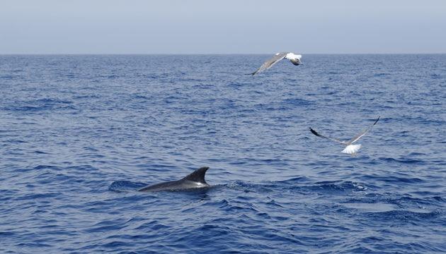 Die erste internationale Konferenz über Walbeobachtung wird größtenteils online durchgeführt. Foto: Cabildo de Tenerife