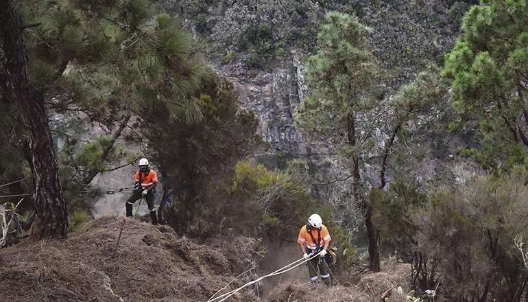 Forstarbeiter bei ihrer gelegentlich gefährlichen Arbeit in den bewaldeten Bergen von Teneriffa Foto: cabildo de tenerife