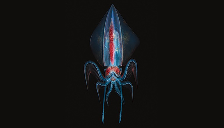 """Zweiter Platz in der Kategorie """"unter Wasser"""": Foto von Marco Steiner (AT) mit dem Titel """"Alien"""""""