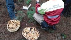 Personal der Umweltbehörde kann in den Wäldern jederzeit Kontrollen durchführen. Foto: cabildo de tenerife