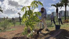 Bürgermeister Augusto Hidalgo griff in Jinámar persönlich zur Schaufel. Las Palmas grüner und nachhaltiger zu machen, ist eines seiner Anliegen. Foto: Ayuntamiento de Las Palmas de Gran Canaria