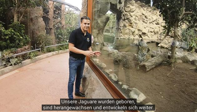 Über die Videos von Loro Parque LIVE, die regelmäßig veröffentlicht werden, können Zuschauer Rafael Zamora durch den Park folgen und viel Interessantes erfahren und entdecken.