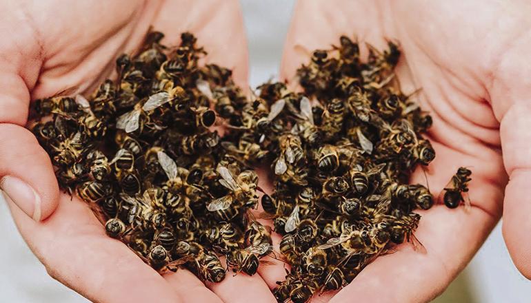 Starben die Bienen auf der Finca La Abejera durch Herbizide? Foto: ecoalpispa