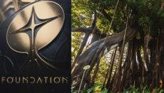 Ob in Puertos botanischem Garten der berühmten Lord-Howe-Feigenbaum als Kulisse diente ist zwar nicht bekannt, aber könnte durchaus möglich sein. Immerhin ist der gigantische Baum eine der Hauptattraktionen des Gartens. Foto: Ayunamiento Puerto de la Cruz