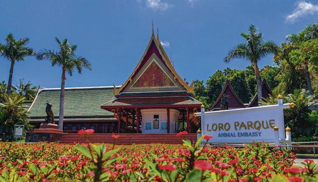 Poema del Mar und Loro Parque werden als erste Freizeitparks der Unternehmensgruppe am 1. Mai wieder die Türen für Besucher öffnen. Für diejenigen, die im vergangenen Jahr eine Jahreskarte erworben haben und sie nicht nutzen konnten, werden beide Parks schon zwei Tage früher, am 29. April geöffnet. Fotos: Poema del Mar/Loro Parque/Moisés Pérez