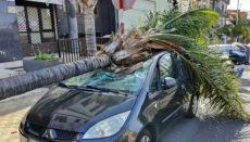 Die Ursache des Sturzes einer Palme auf ein parkendes Auto in der Avenida Bélgica wurde untersucht. Foto: Policia Local de Santa Cruz