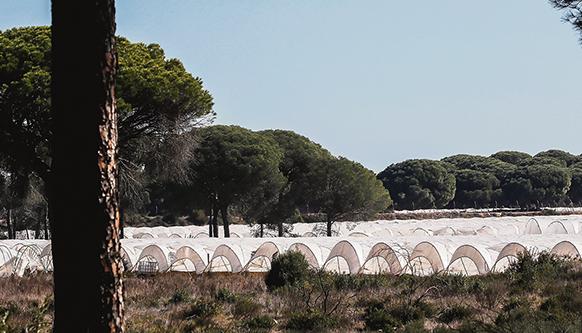 Am Rande des Naturparks Doñana stehen auf Tausenden Hektar Land Plastik-Treibhäuser. Foto: efe