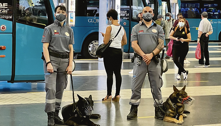 Die Deutschen Schäferhunde Cero und Oakley posieren gemeinsam mit ihren Hundeführern in ihrem neuen Einsatzort im Busbahnhof. Foto: Cabildo de Gran Canaria