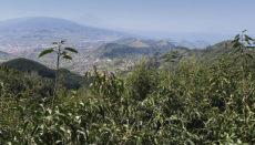 Der Pico del Inglés ist ein Anziehungspunkt für Touristen und Ausflügler. Foto: WB