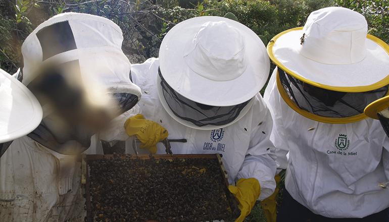 Die Bienenvölker sind ob der mehrjährigen Trockenheit und dem daraus resultierenden Nahrungsmangel geschwächt und bedürfen der besonderen Pflege durch die Imker. Foto: Cabildo de Tenerife