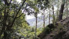 Foto: CAbildo de LA Gomera