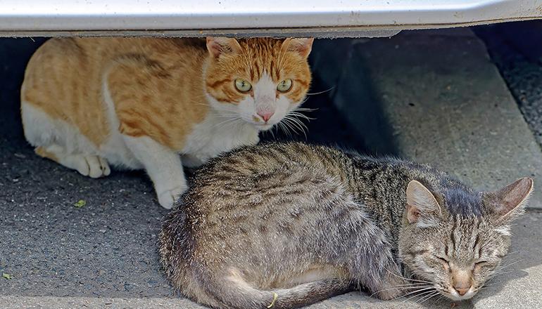 In Santa Cruz und Umgebung gibt es zahlreiche frei lebende Katzen, die von ehrenamtlichen Helfern betreut und kontrolliert werden. Foto: Pixabay