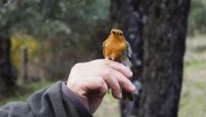 Dank dem Projekt Life Olivares Vivos sind viele Vögel in die Olivenplantagen zurückgekehrt. Foto: Olivares Vivos