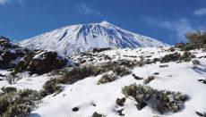 Im 17. und 18. Jahrhundert lag auf Teneriffas Gipfel noch häufiger und länger Schnee als heute. Das Eis, das in den Schneebrunnen des Teide monatelang erhalten blieb, wurde mit Maultieren in die bewohnten Inselgebiete transportiert – ein Knochenjob für Mensch und Tier. Foto: moisés pérez
