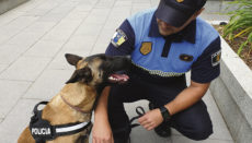 Akyra K-01 ist ein Belgischer Schäferhund (Malinois). Der Beamte, der für sie verantwortlich ist, hat eine Ausbildung zum Hundeführer absolviert und ein enges Vertrauensverhältnis zu dem Tier aufgebaut. Foto: Ayto. La orotava