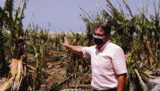 Die Brände in El Paso verwüsteten Plantagen und zerstörten auch Häuser. Foto: Cabildo La ?alma