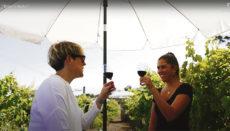 """""""Entre viñedos"""" heißt das neue Angebot des Weinmuseums: Ein Picknick im Weingarten. Foto: casadelvinotenerife"""