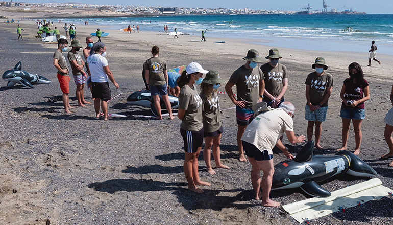 Zugegeben: In Bezug auf Masse und Gewicht ist der Unterschied beträchtlich. Trotzdem konnten die Freiwilligen mithilfe der aufblasbaren Gummi-Orcas den Rettungsplan durchspielen. Foto: efe