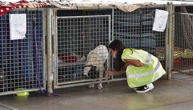 Streicheleinheiten und Fürsorge: Im improvisierten Tierheim in Los Llanos kümmern sich Tierärzte und Helfer um Hunde, Katzen und andere Tiere, die wegen des Vulkanausbruchs ihr Zuhause verloren oder vor der glühenden Lava flohen. Fotos:EFE